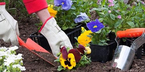 к чему снится сажать цветы на могиле