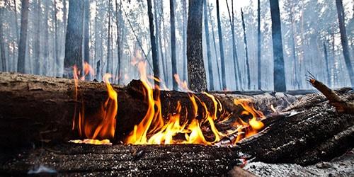 к чему снится что дерево горит