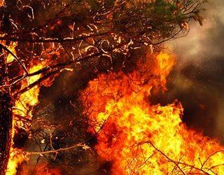 Дерево горит