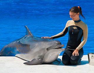 Гладить дельфина