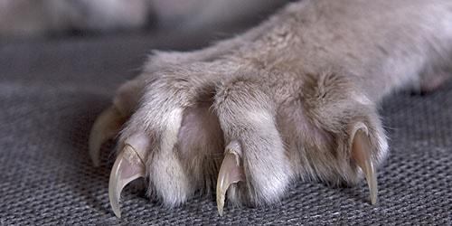 видеть во сне кошачий коготь