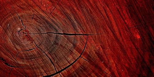 к чему снится рубить красное дерево
