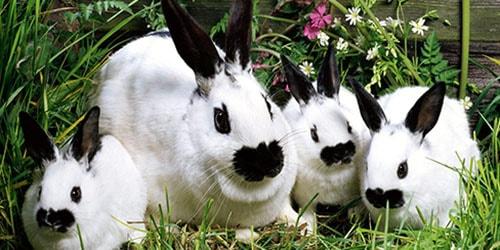 к чему снится крольчиха с крольчатами
