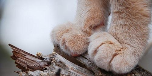видеть во сне лапы кошки