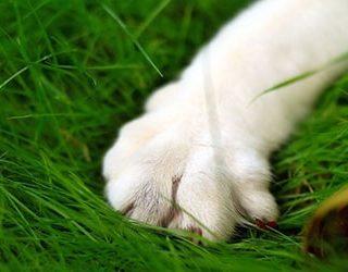 К чему снится лапа кошки?