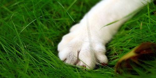 к чему снятся лапы кошки