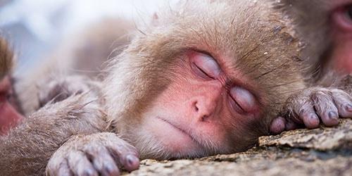 видеть во сне мертвую обезьяну