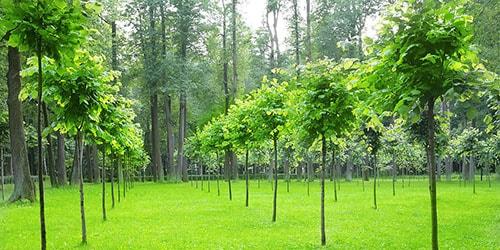 видеть во сне молодые деревья
