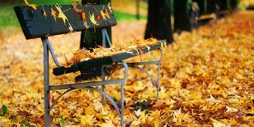 ноябрь во сне