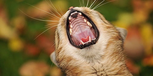 видеть во сне пасть животного