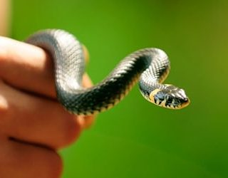 Поймать змею