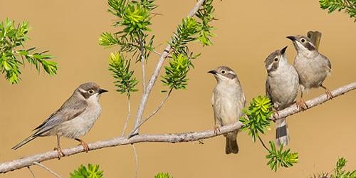 к чему снятся птицы на дереве