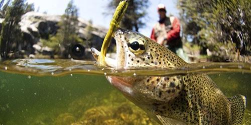 видеть во сне рыбу на крючке