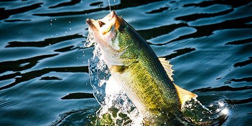 к чему снится живая рыба на крючке