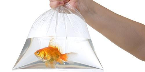 нести рыбу в пакете во сне