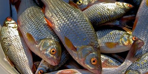 к чему снится свежая рыба в пакете