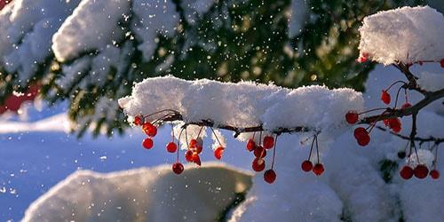 к чему снятся пушистые снежинки