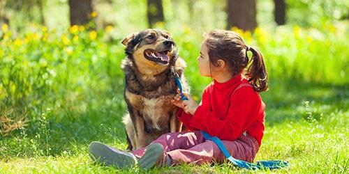 к чему снится что собака кусает ребенка