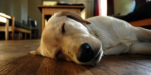 совершить убийство собаки во сне