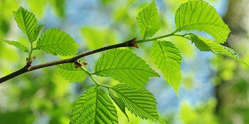 видеть во сне зеленые ветки деревьев