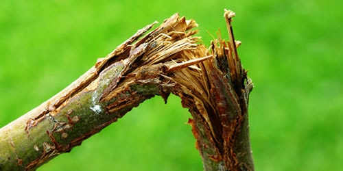сломанная ветка