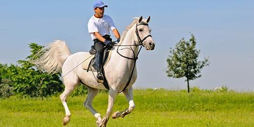 видеть во сне всадника на коне