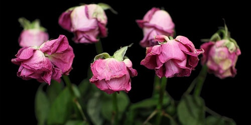 видеть во сне засохшие цветы