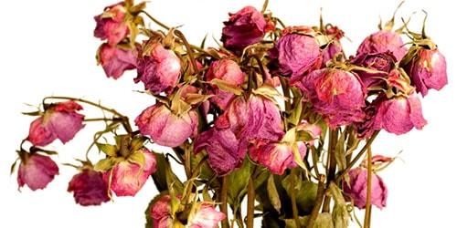 к чему снятся завядшие цветы