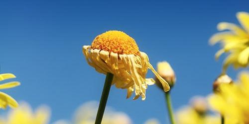 видеть во сне полевые завядшие цветы