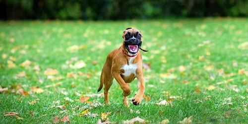 к чему снится бежать от собаки