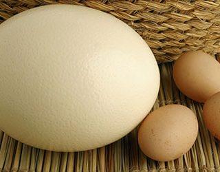 Большое яйцо
