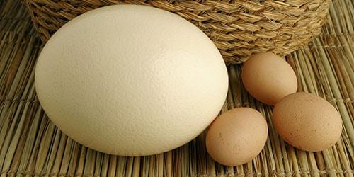 видеть во сне большое яйцо