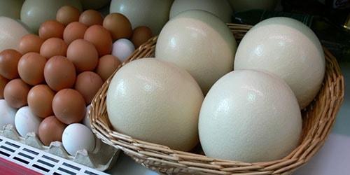 огромные яйца