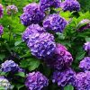 видеть во сне цветущие кусты
