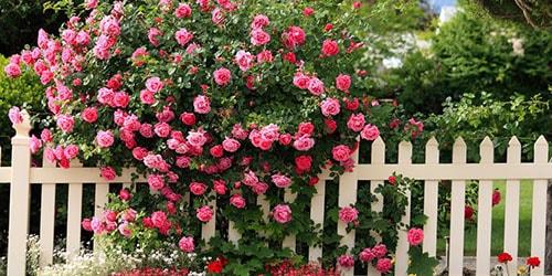 к чему снятся цветущие кусты во дворе