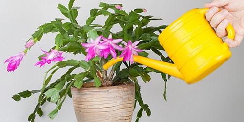 поливать цветок в горшке во сне