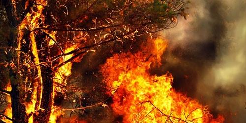 видеть во сне горящее дерево