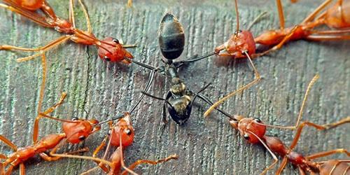 много насекомых