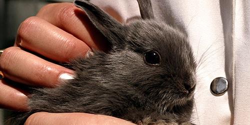 серый крольчонок