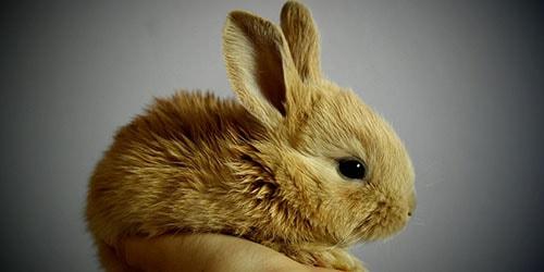 к чему снится кролик на руках