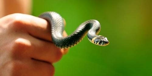 ловить змей руками во сне