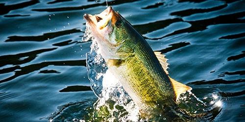 видеть во сне как муж поймал рыбу