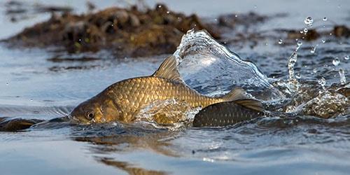 отпускать рыбу в воду во сне