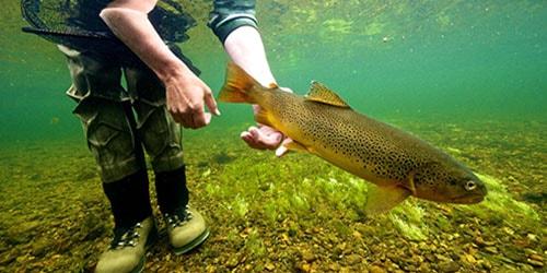 к чему снится отпускать рыбу в воду