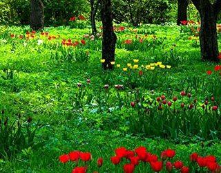 К чему снится поляна с цветами?