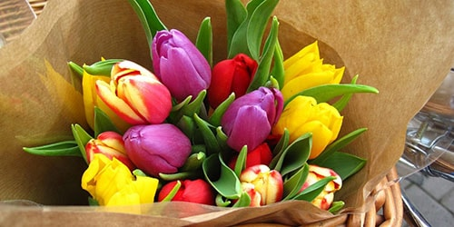 к чему снятся тюльпаны разных цветов