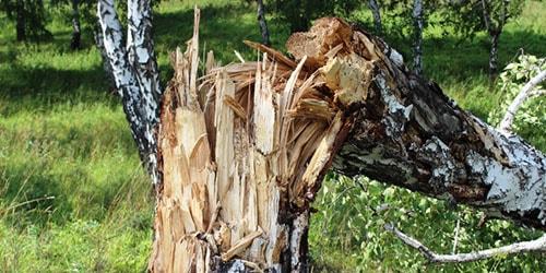 к чему снится сломанное дерево