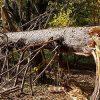 видеть во сне сломанное дерево