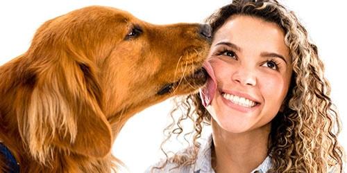 ласковая собака