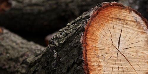 Сонник спиленное дерево к чему снится спиленное дерево во сне